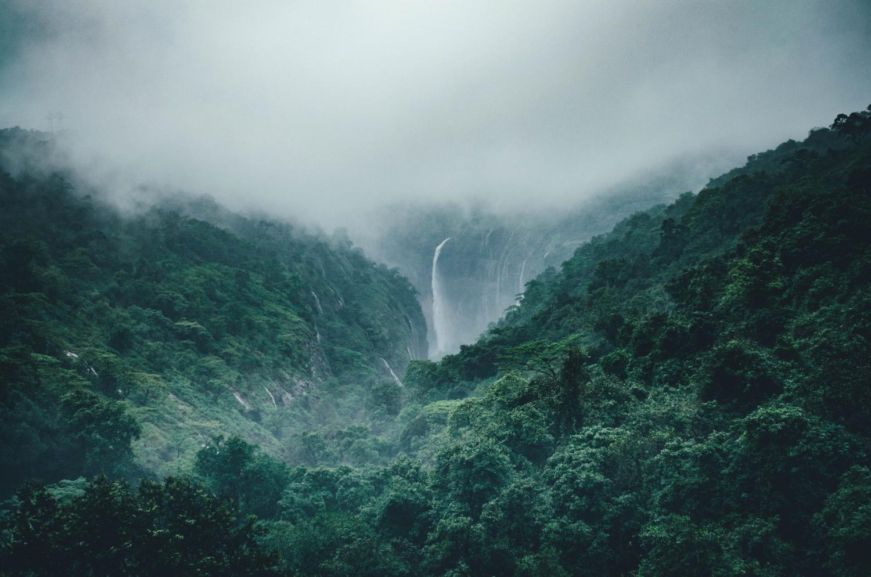 Ein Wald duftet einladend.
