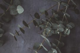 Spa Eukalyptus