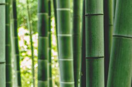 bamboo wood raumduft aromea