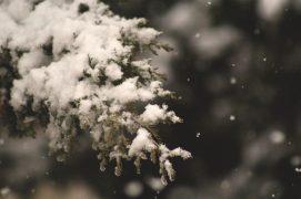 Schnee auf einem Baum Nahaufnahme