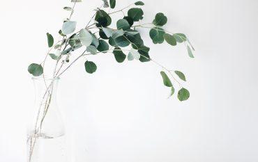 eukalyptus in glasvase vor weißer wand