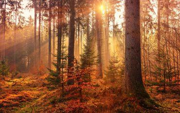 Herbst im Wald, verfärbte Blätter und Bäume mit Sonnenlicht