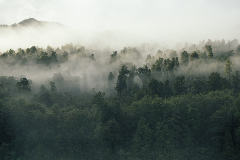 Dampfnebel im Wald