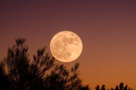 Moondance Duft