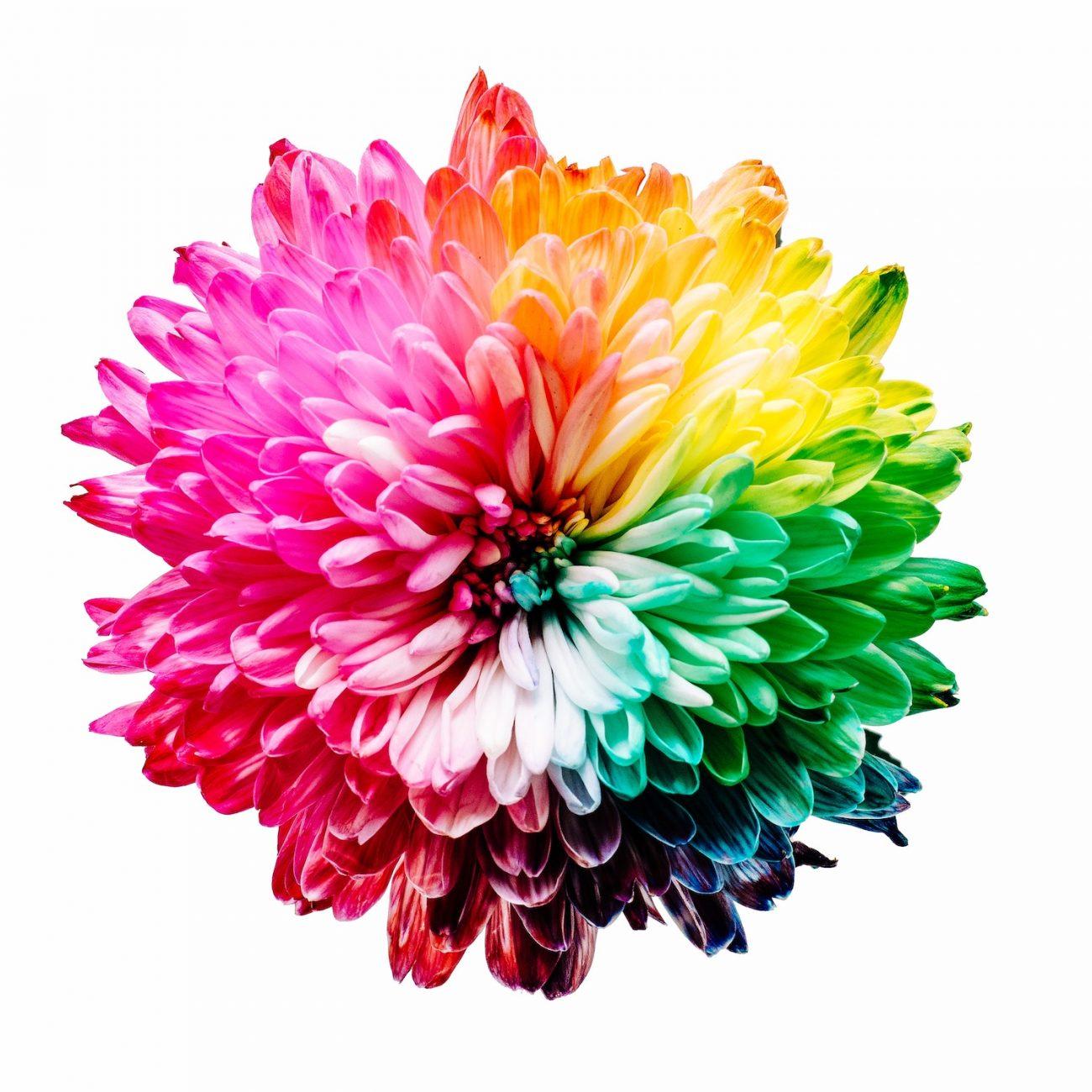 Mehrfarbige Blume