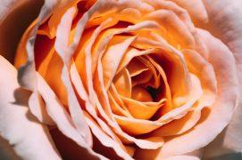summer blossom raumduft aromea