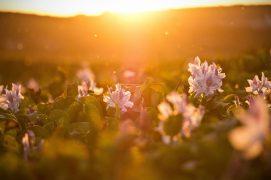 sunshine raumduft aromea