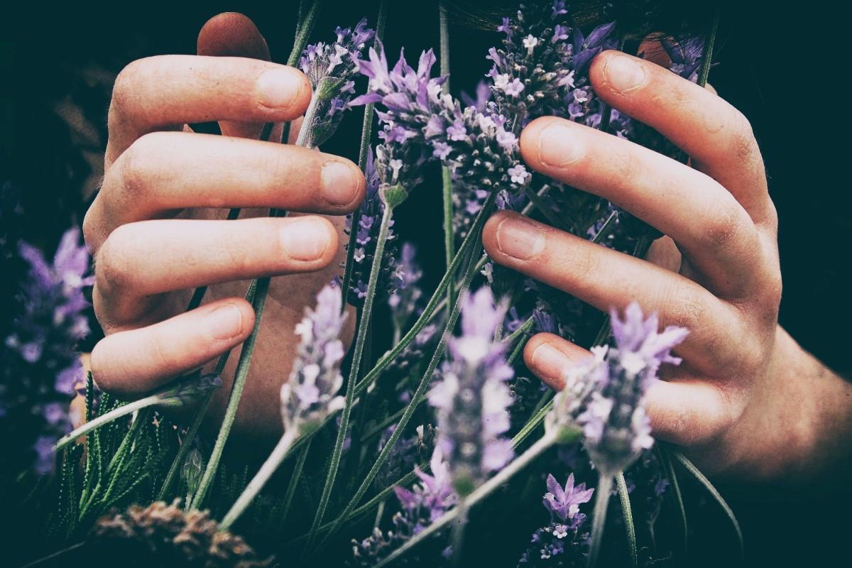 Frauen Hände mit Lavendel